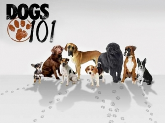 Dog 101